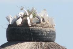 Eastern Cape, on a roof, iZArte  Kunstreis 2013