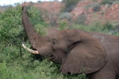 Kruger National Park, foto: Sara Rebergen