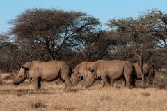 foto Sara Rebergen, neushoorns, Kruger Park, 2018