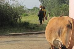 langs de weg in Zimbabwe, iZArte Kunstreizen
